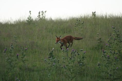 FOX 210714