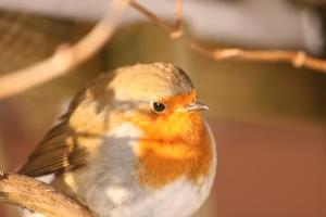A regular visitor to our garden.