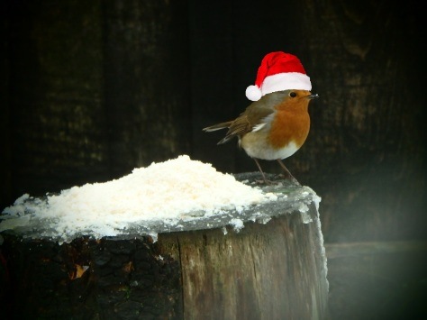Robin in a Christmas Hat