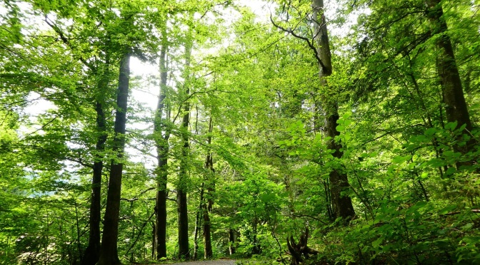 Rewilding Lessons In Risnjak